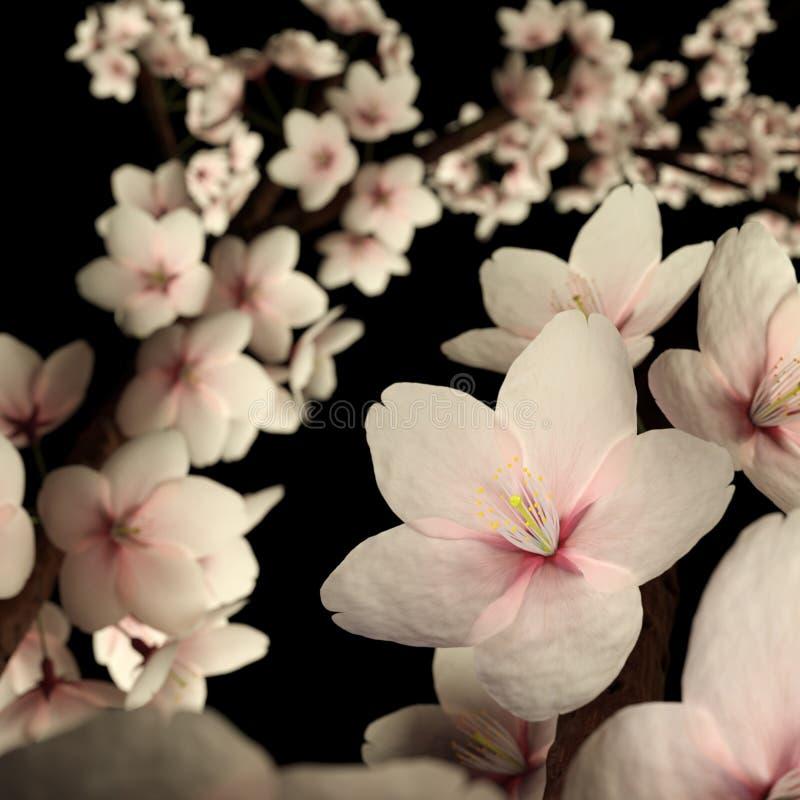 Cherry Blossom o Sakura rosado en negro libre illustration