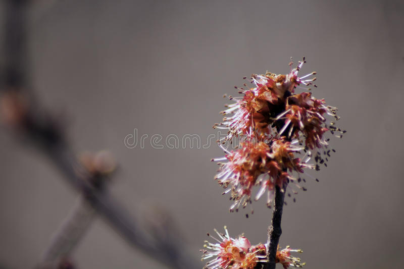 Download Cherry Blossom stock image. Image of cherry, tree, signs - 91247987