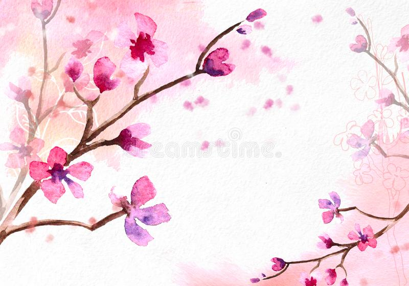 Cherry blossom on pink watercolor background. stock illustration