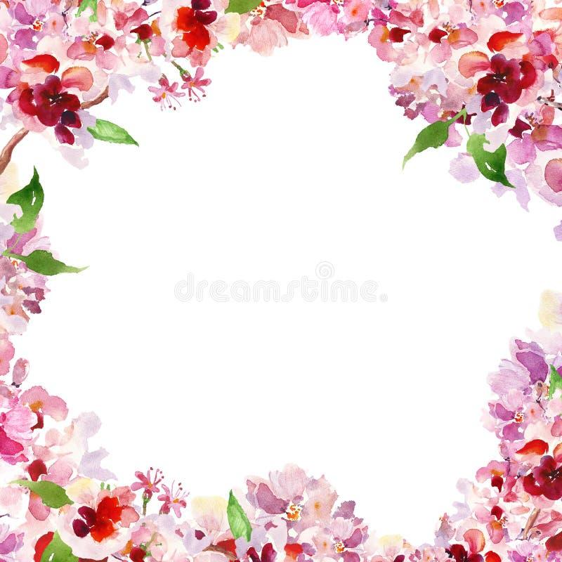 Cherry Blossom ram M?lade den blom- gr?nsen f?r vattenf?rgv?ren med handen rosa sakura blommor p? vit bakgrund royaltyfri illustrationer