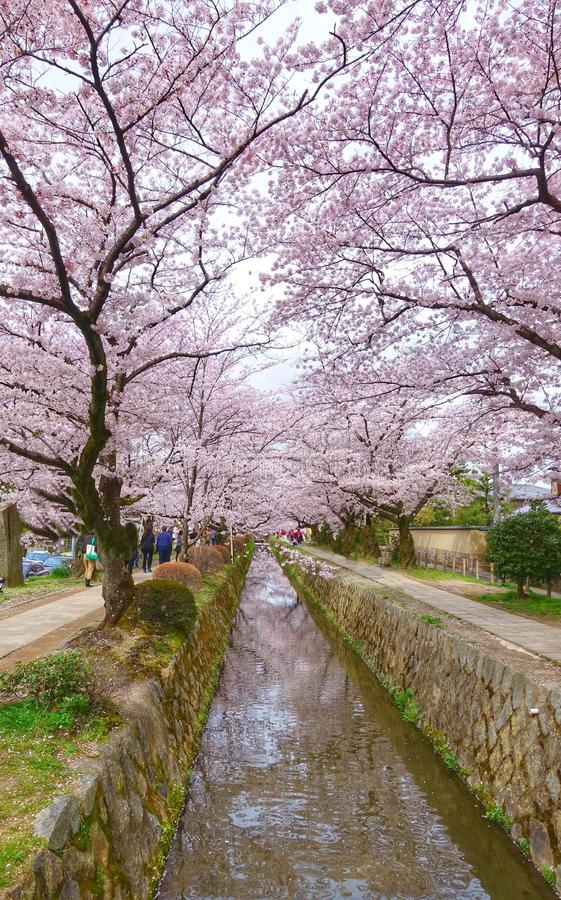 Cherry Blossom Season à Osaka image libre de droits