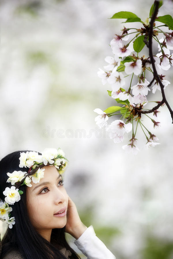 Cherry blossom season royalty free stock images