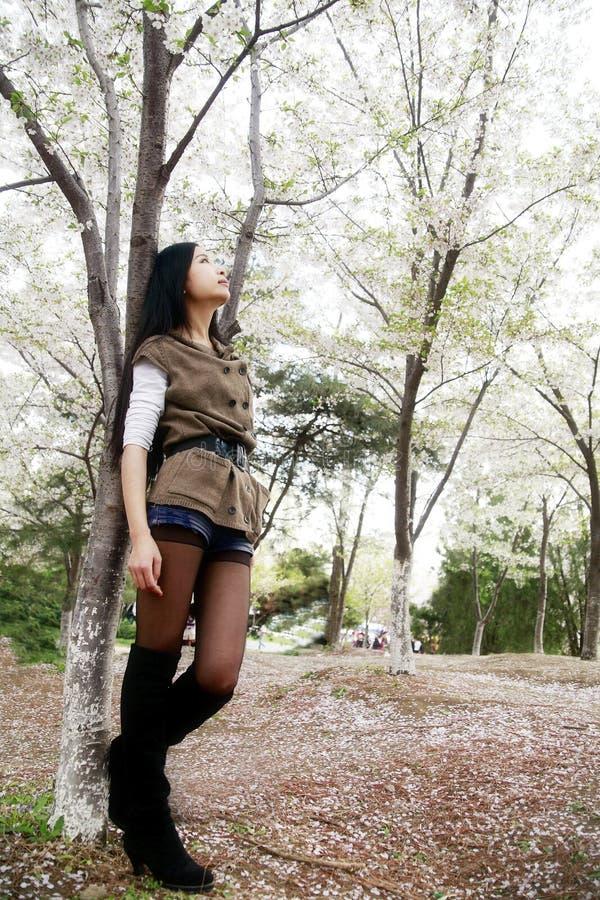 Download Cherry blossom season stock photo. Image of china, chinese - 14001410