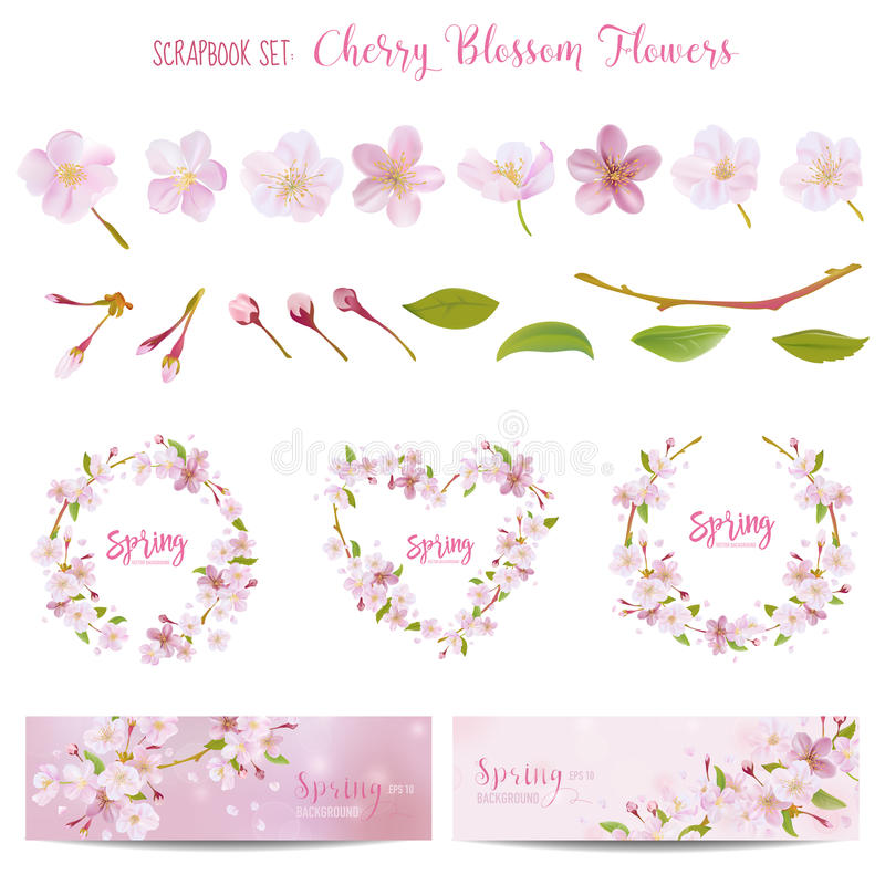 Cherry Blossom Spring Background och designbeståndsdelar vektor illustrationer