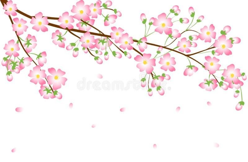 Cherry Blossom-tak stock illustratie