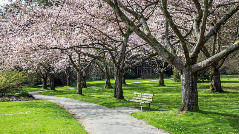 Cherry Blossom-toevluchtsoord royalty-vrije stock foto