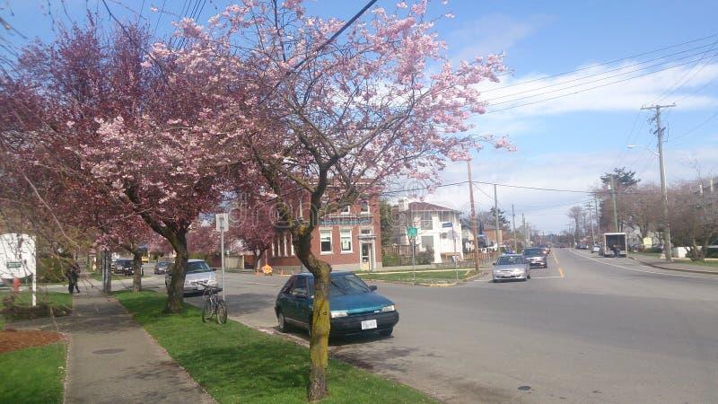 Cherry Blossom Town stock foto