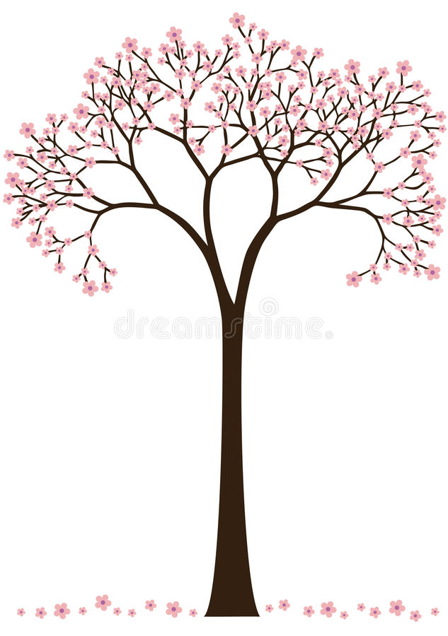 Free Cherry Blossom Tree Royalty Free Stock Image - 13642916