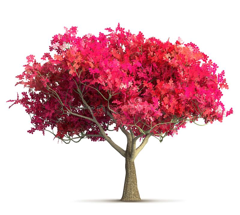 Free Cherry Blossom Tree Isolated 3D Illustration Royalty Free Stock Images - 137488849