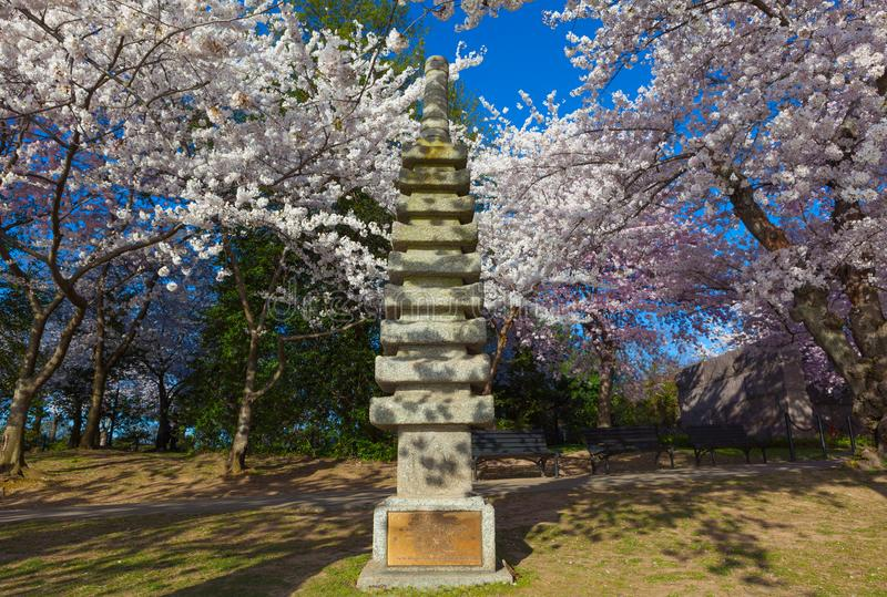Cherry blossom tree and the Japanese stone Pagoda Temple gifted by Ryozo Hiranuma to Washington CD, in 1957 royalty free stock image