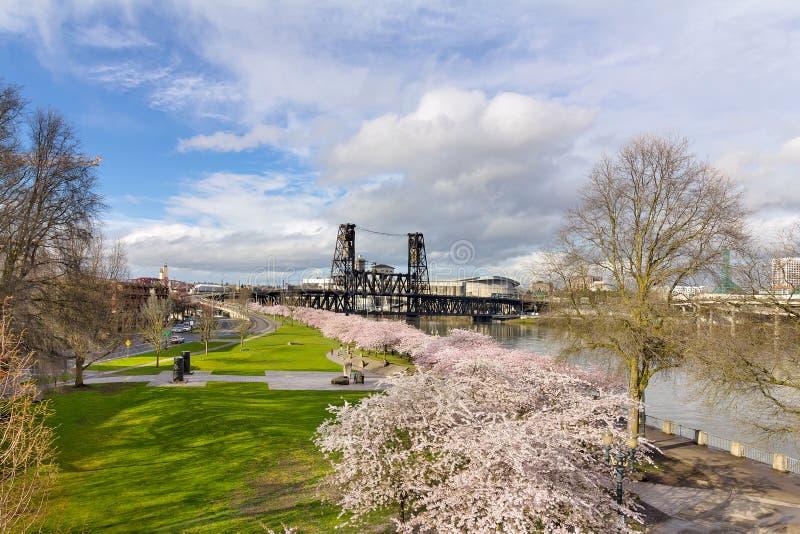 Cherry Blossom Tree no parque de margem imagens de stock royalty free