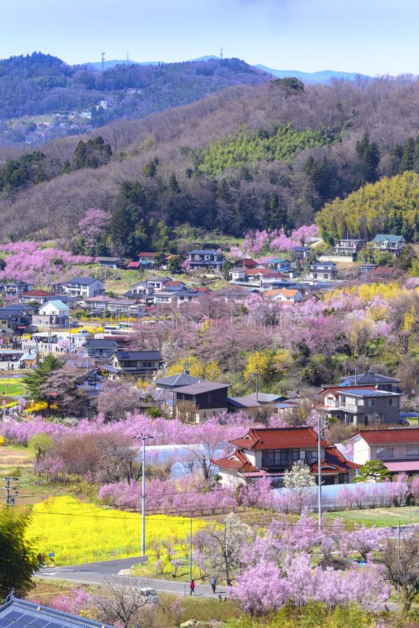 Cherry-blossom trees & x28;Sakura& x29; and many kinds of flowers in Hanam. Iyama park and Fukushima cityscape, in Fukushima, Tohoku area, Japan. The park is royalty free stock image
