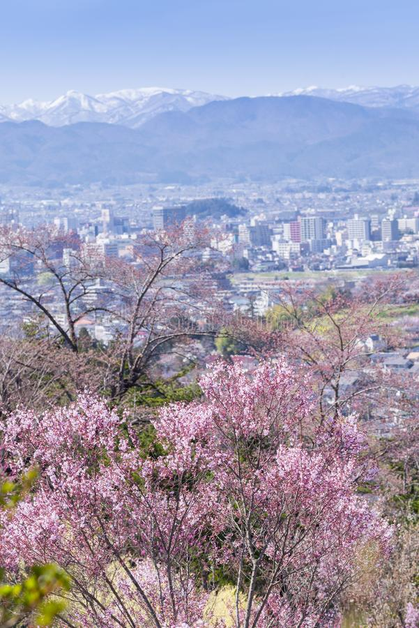Cherry-blossom trees & x28;Sakura& x29; and many kinds of flowers in Hanam. Iyama park and Fukushima cityscape, in Fukushima, Tohoku area, Japan. The park is royalty free stock photo