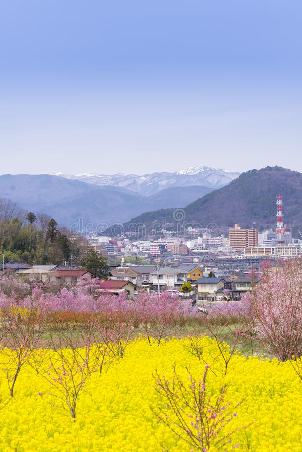 Cherry-blossom trees & x28;Sakura& x29; and many kinds of flowers in Hanam. Iyama park and Fukushima cityscape, in Fukushima, Tohoku area, Japan. The park is stock image