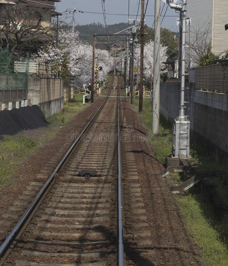 Cherry blossom tunnel, Keifuku line, Arashiyama, Kyoto from inside the train in sunny day in Kyoto stock image