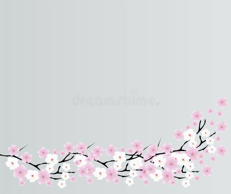 Cherry Blossom vector illustration
