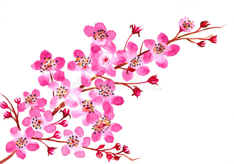 Cherry Blossom Watercolor stock afbeelding