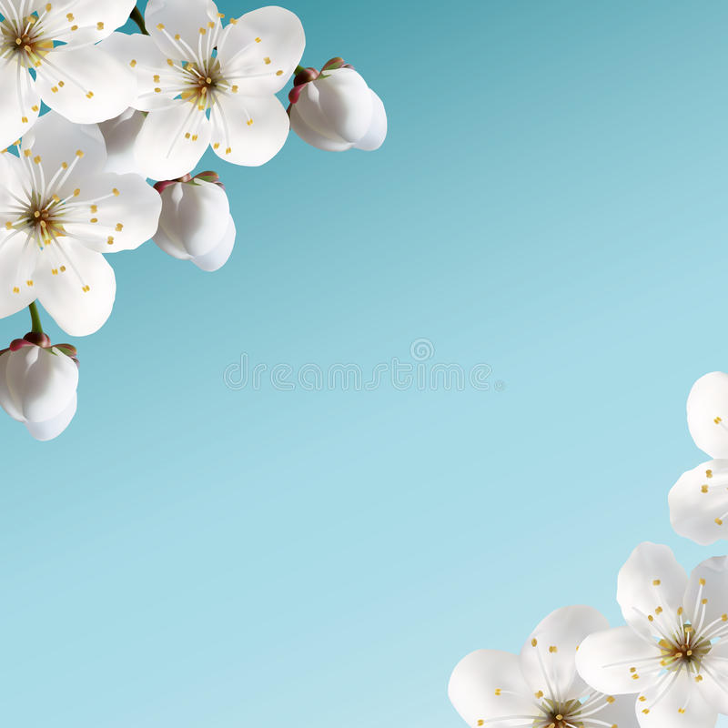 Download Cherry blossoms stock illustration. Image of swallow - 26605719