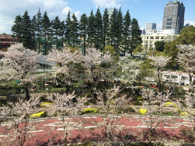 Download Cherry Blossoms image stock éditorial. Image du cerise - 45364689