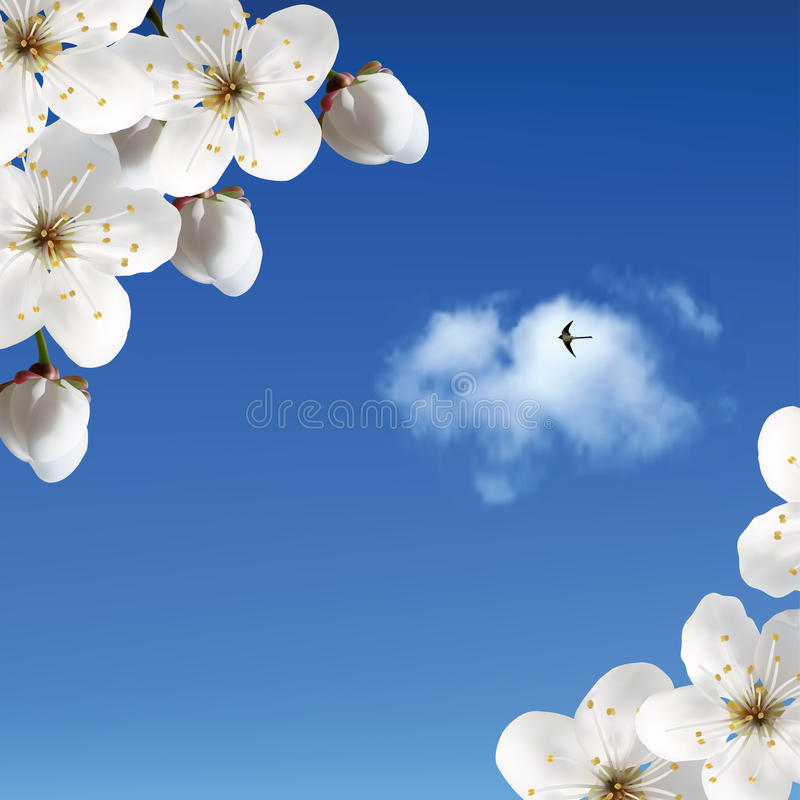 Download Cherry Blossoms Against The Sky With Clouds And Sw Stock Illustration - Illustration of cherry, tenderness: 26605707