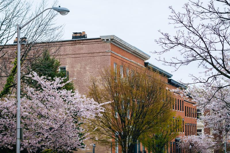Cherry blossoms along Madison Street in Mount Vernon, Baltimore, Maryland.  stock photography