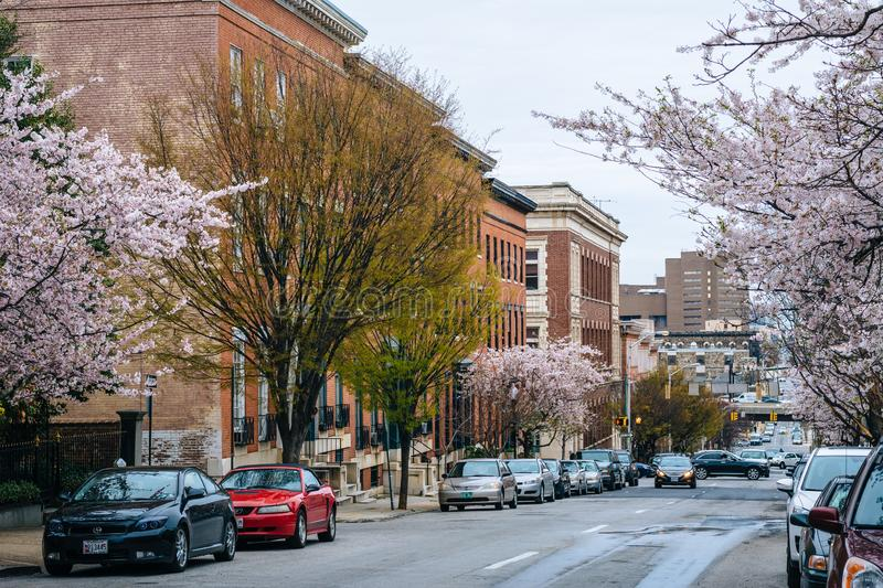 Cherry blossoms along Madison Street in Mount Vernon, Baltimore, Maryland.  stock photo