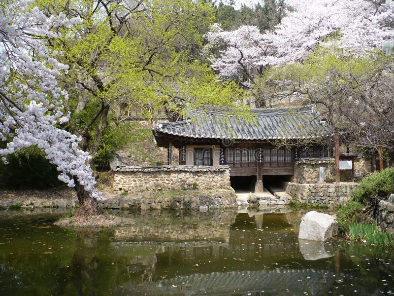 Cherry Blossoms Bloom na mola no parque público de Coreia do Sul foto de stock