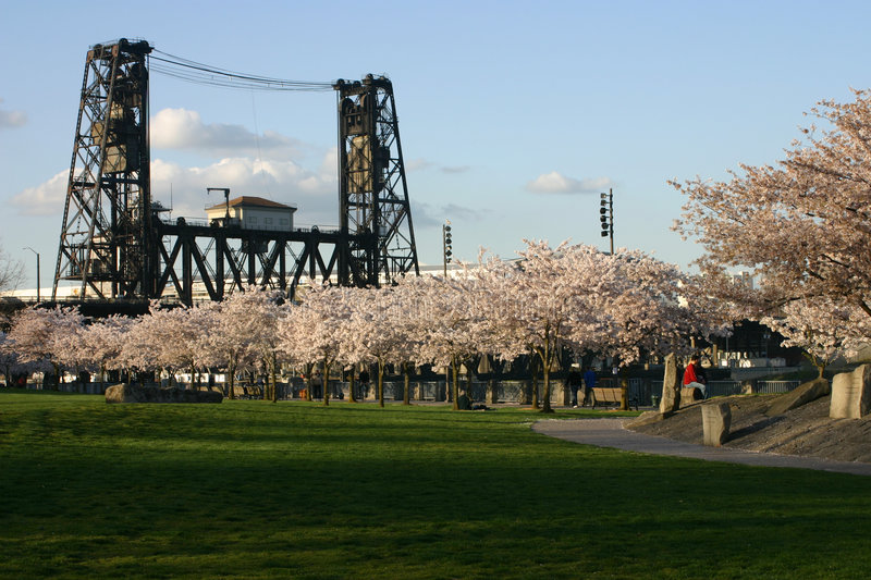 Cherry blossoms and bridge. royalty free stock images
