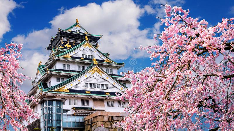Cherry blossoms and castle in Osaka, Japan.  stock photo