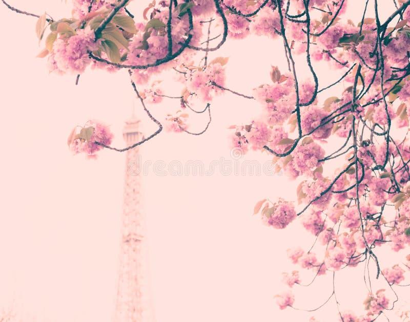 Cherry Blossoms e torre Eiffel fotografia de stock royalty free
