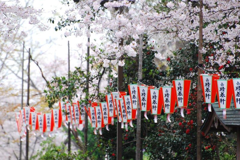 Cherry Blossoms en el parque de Ueno Onshi fotografía de archivo