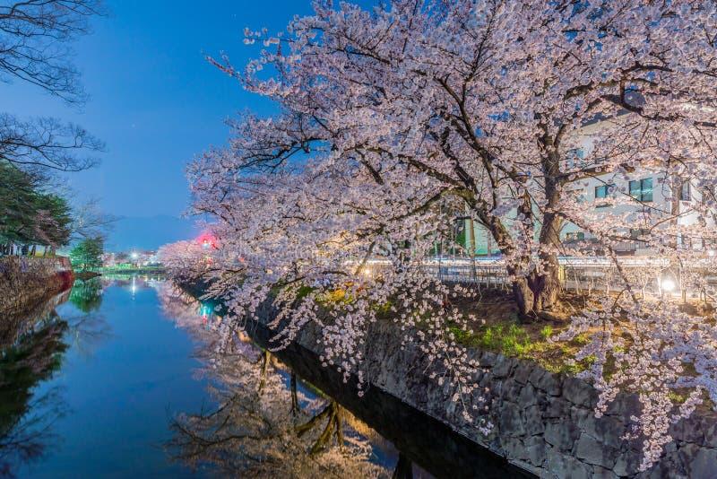 Cherry Blossoms en la noche en Japón imágenes de archivo libres de regalías