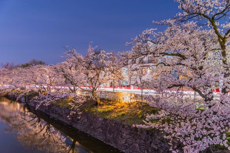 Cherry Blossoms en la noche en Japón foto de archivo