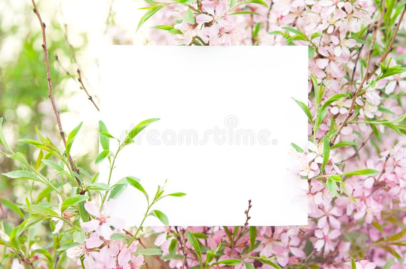 Cherry blossoms in full bloom. Creative layout made of flowers and leaves with paper card. stock photos