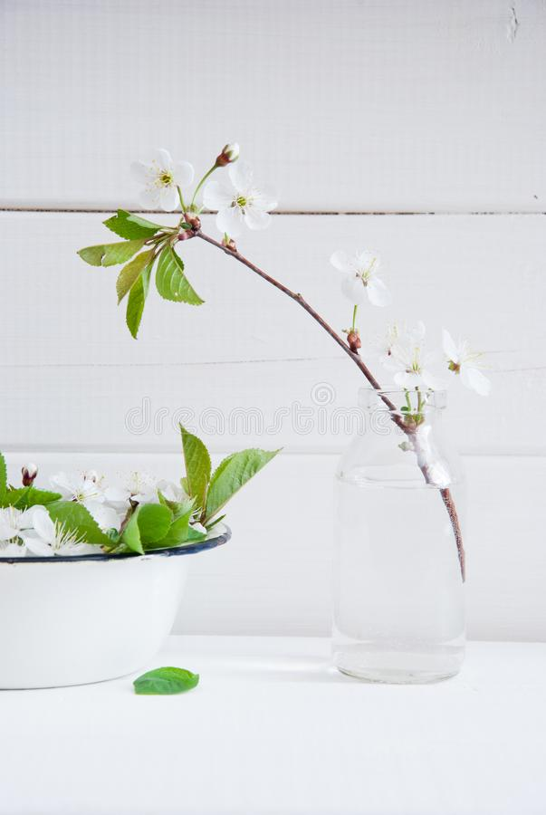 Blossoming cherry on a white wooden background royalty free stock photo