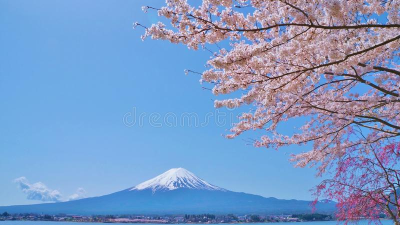 Cherry-blossoms and Mount Fuji which are viewed from Lake Kawaguchiko in Yamanashi, Japan royalty free stock photos
