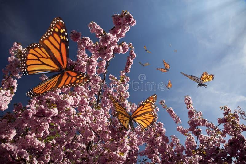 Cherry Blossoms och fjärilar stock illustrationer
