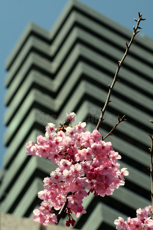 Download Cherry Blossoms Tall Building Stock Image - Image: 2190263