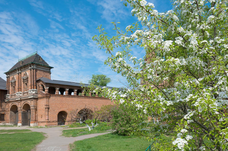 Cherry blossoms. In the territory Krutitsy Patriarchal Metochion of Russian Orthodox Church royalty free stock photography