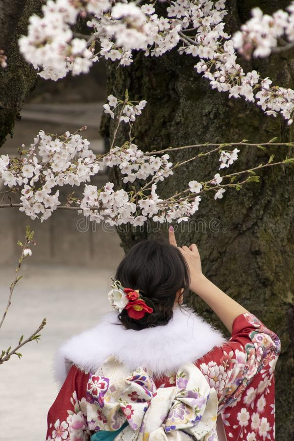 Cherry Blossoms in Tokyo stock images