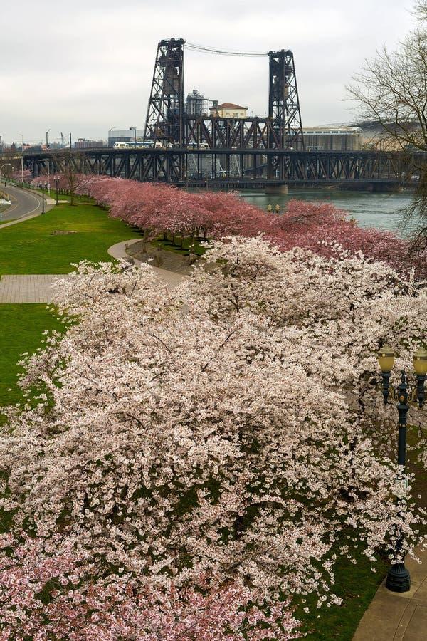 Cherry Blossoms Trees entlang Portland-Ufergegend lizenzfreie stockfotos