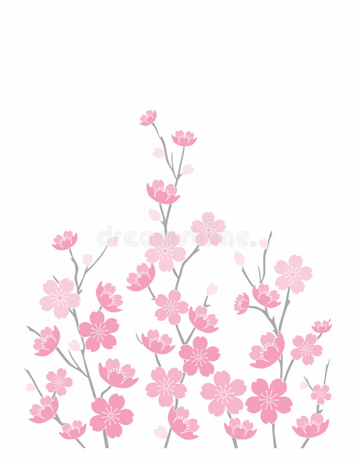 Download Cherry Blossoms On White stock vector. Image of background - 468317