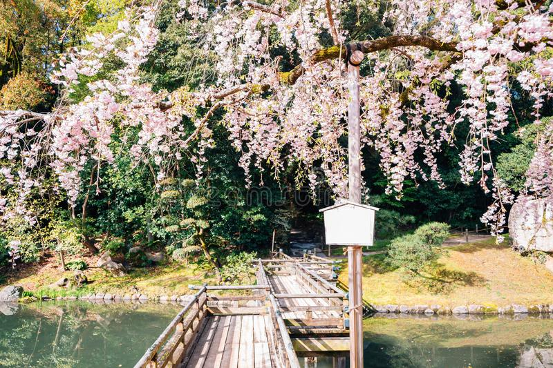 Cherry blossoms and wooden bridge at Korakuen garden in Okayama, Japan. Nature scenery stock images