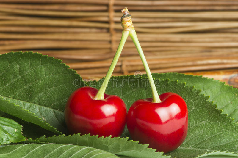 Download Cherry branch with leaves stock photo. Image of bright - 31369188