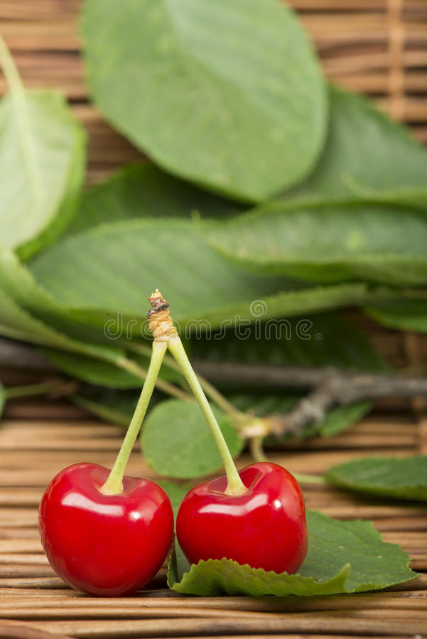 Download Cherry branch with leaves stock image. Image of bright - 31369195