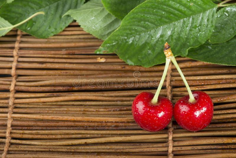 Download Cherry branch with leaves stock image. Image of bright - 31369239