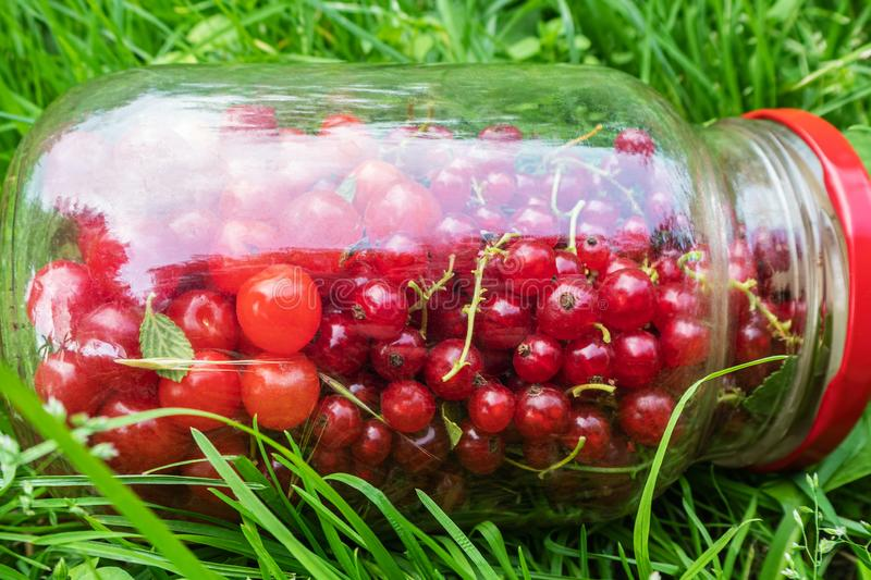 Cherry and currant berries in glass jar stock images