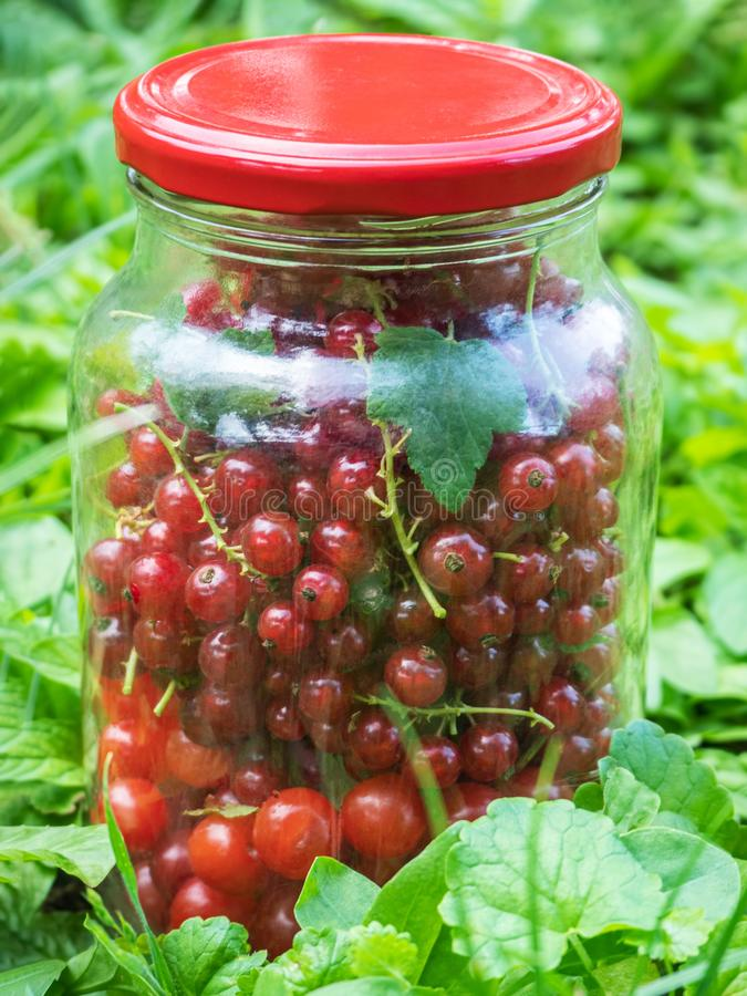 Cherry and currant berries in glass jar royalty free stock photo