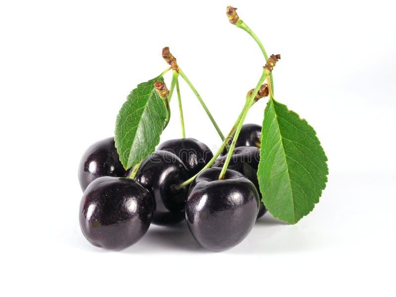 cherry czarnej lato obraz stock