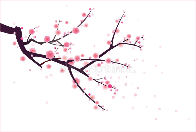 Cherry- eller plommonblomningmodell stock illustrationer